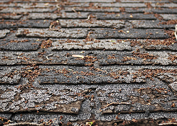 Do I need a new roof-damage